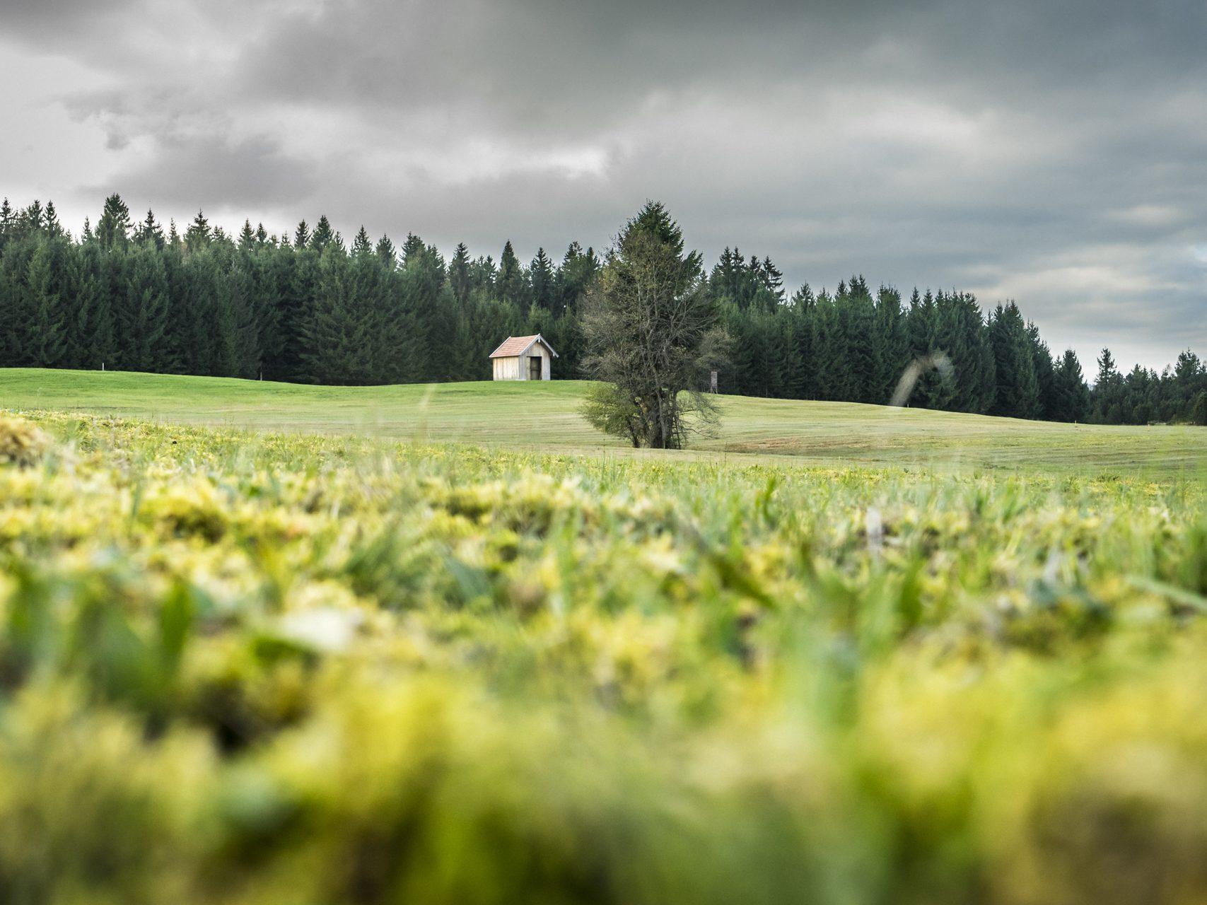 Ammergauer Moor