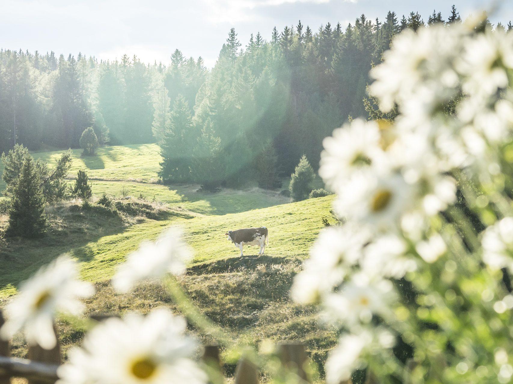 """""""Dolorama""""-Wanderweg, Südtirol, Italien"""