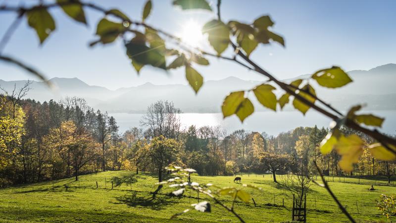 Weide bei Gmund * Pasture near Gmund