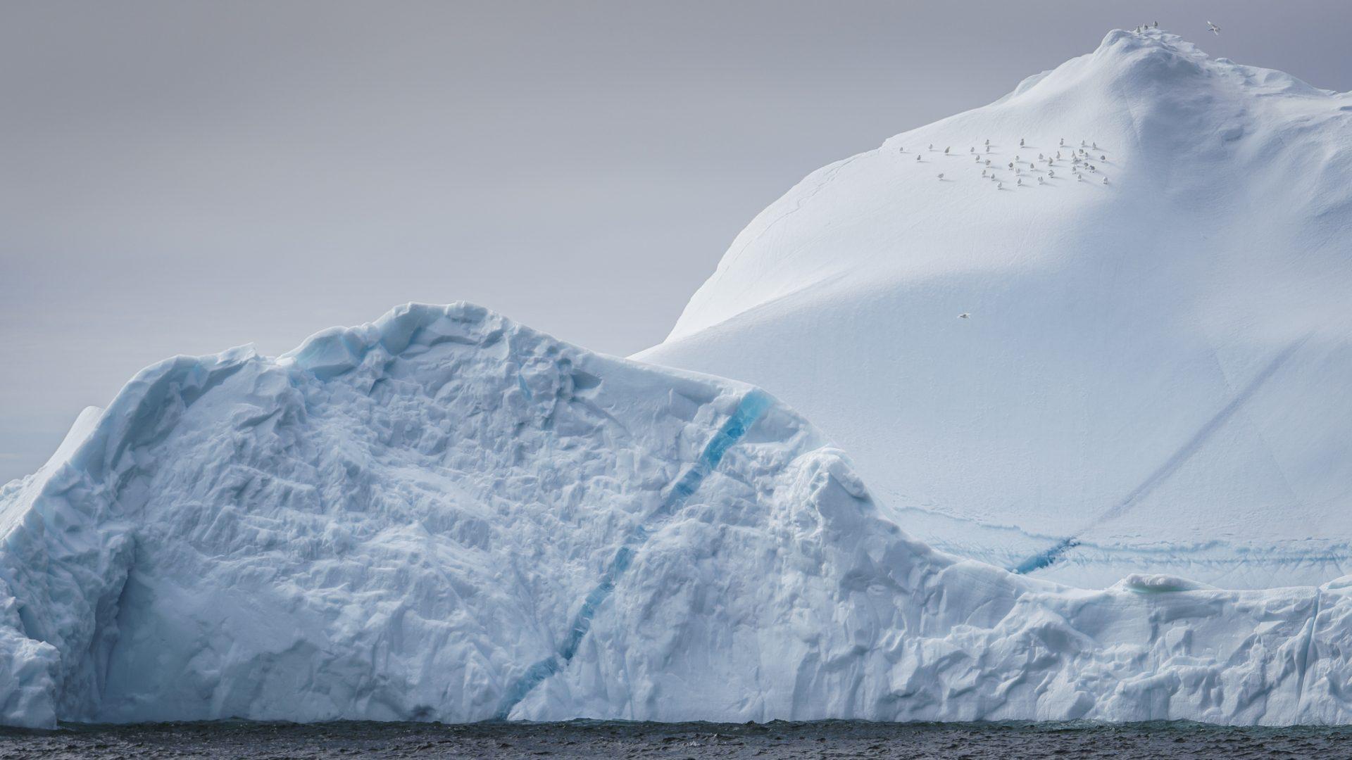 Eisberge an der Westküste