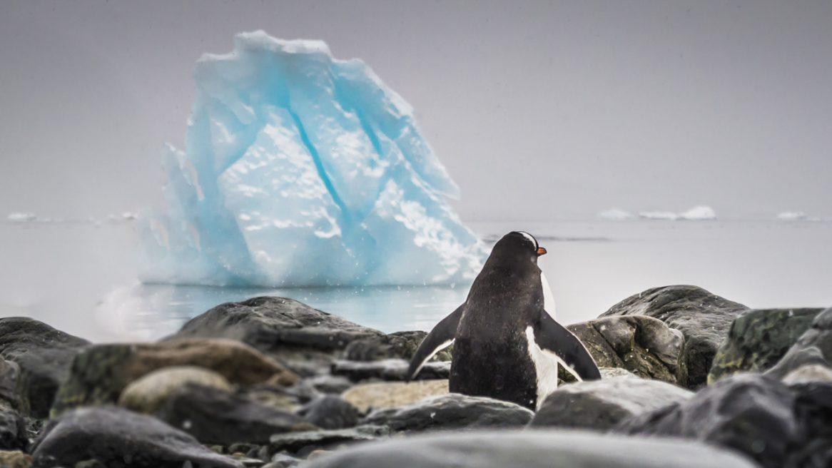 Antarktis-Outdoor