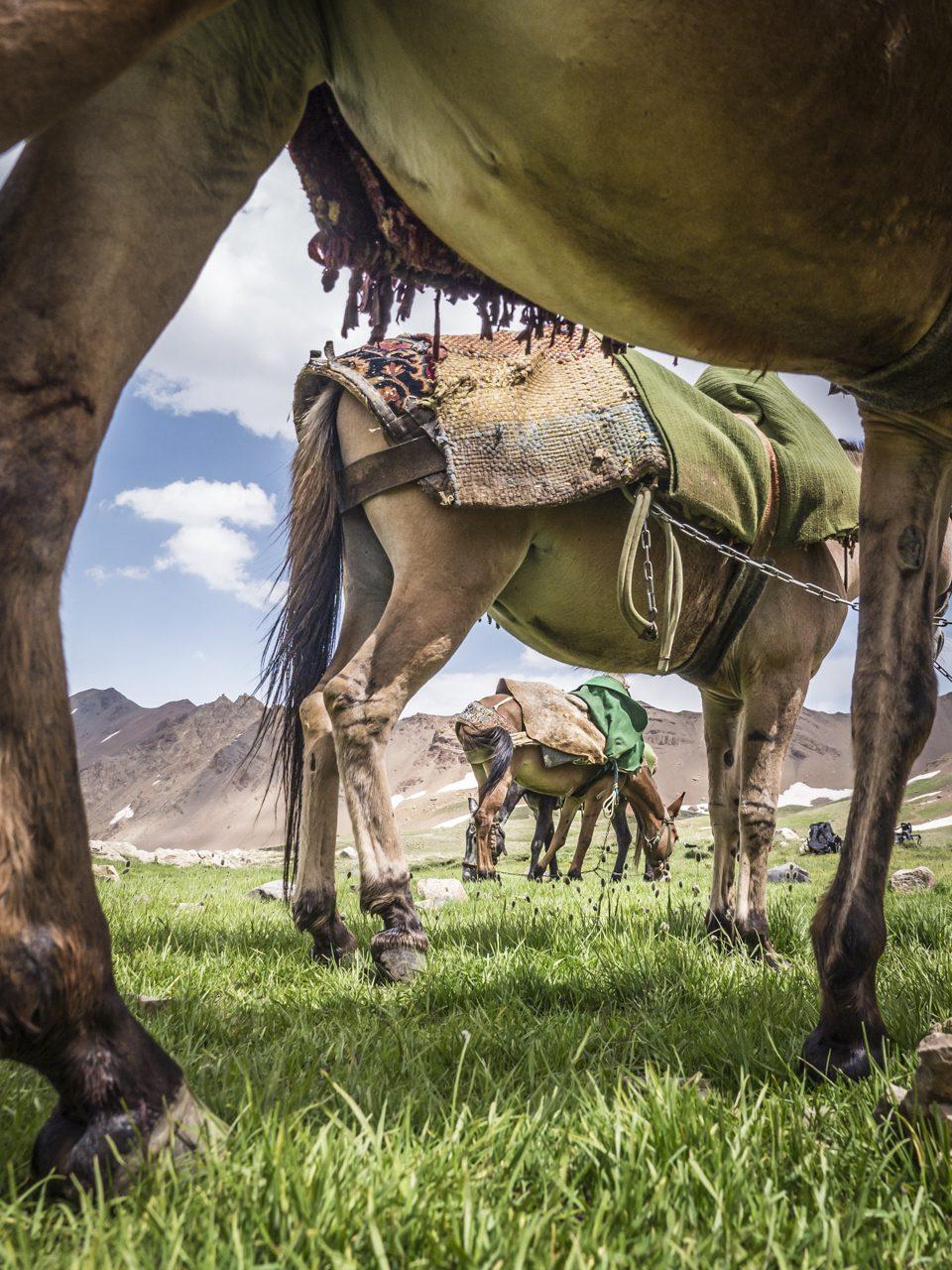 Iran, Alam-Kuh-Region, Khoram-dasht-Tal, Mulis, Asien, 10.07.2014