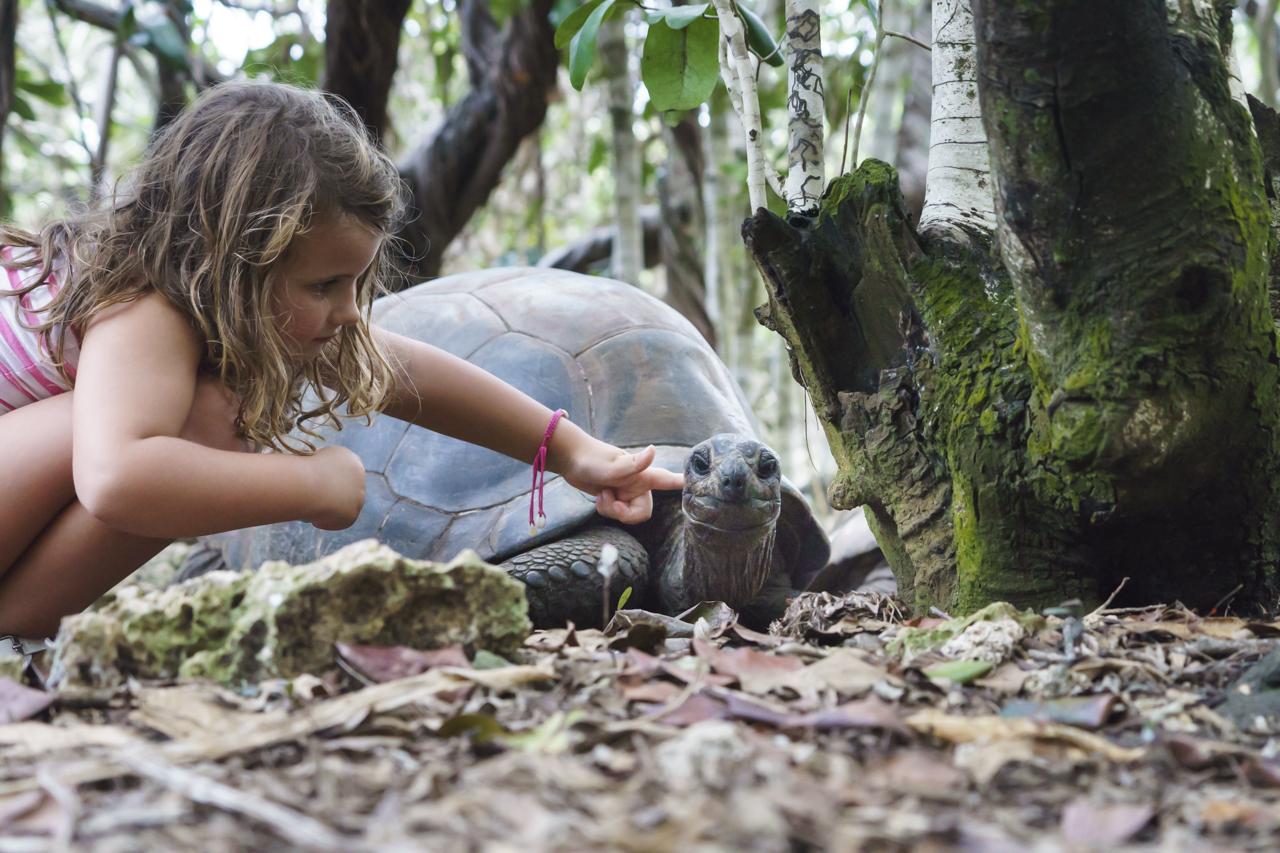 Naturreservat Île aux Aigrettes: Aldabra-Riesenschildkröte